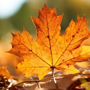 Осенняя фотосессия цены