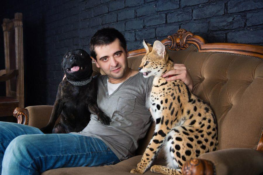 фотосессия с Сервалом в Москве