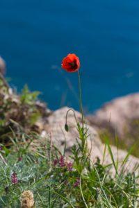 фотограф в Крыму цены