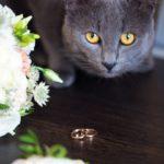 Животные на свадьбе