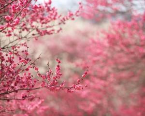 Фотосессия в яблоневых садах, места для фотосессии в яблоневых садах, Популярные места для свадебной фотосъемки в Москве, Фотосессия в цветущей сакуре в Москве, фотосессия в цветущих садах, цветущие яблоневые сады, заказать фотосессию в цветущих яблонях, сколько стоит фотосессия в цветущих садах.